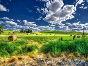 Rolls of pasture and rural homes