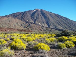 The Teide surrounded by shrubbery (Canary Islands, Spain)