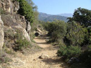 Path of Los Molinos (Los Alcornocales)