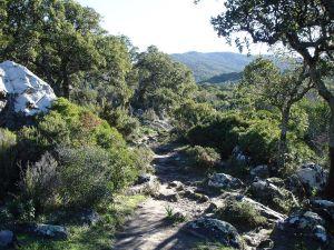 """Path of """"el Picacho y el Aljibe"""""""