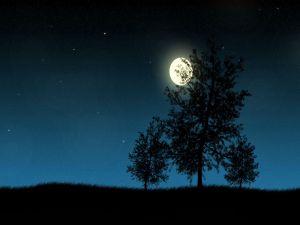 The moon illuminating the trees