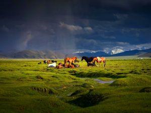 Horses on the grassland