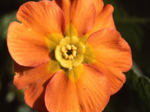 Flower with orange petals