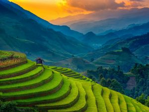 Terraced rice cultivation