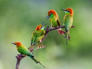 Pretty colorful birds