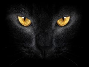 Black cat with golden eyes