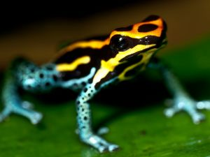 Frog with pretty colors