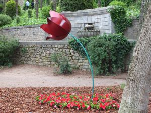 Tulip in a garden