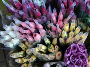 Rose buds of various colors