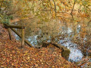 Autumnal view of Halbachhammer pond