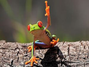 Frog lifting the finger