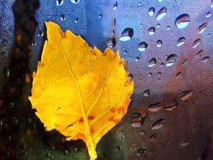 Yellow leaf supported on a glass with drops