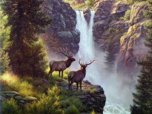 Deer in the waterfall