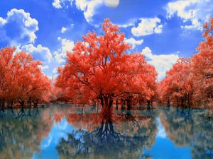Red trees in the water