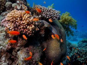 Orange fishes under water