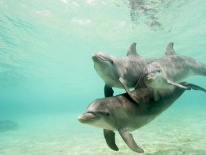 Dolphins under the sea