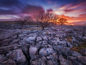 Trees over rocks
