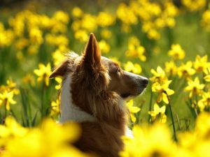 Dog among yellow flowers