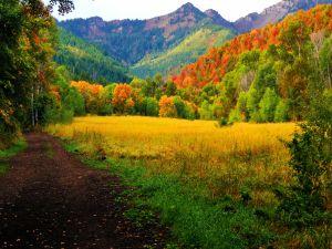 A field in autumn