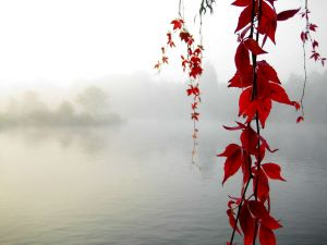 Branches with red leaves on a lake