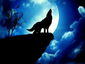 A wolf at full moon