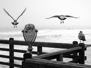 Three gulls on the pier