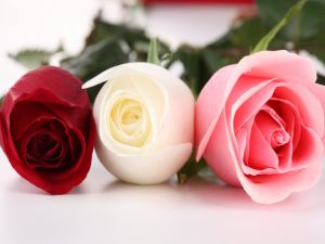 Roses: red, white and pink