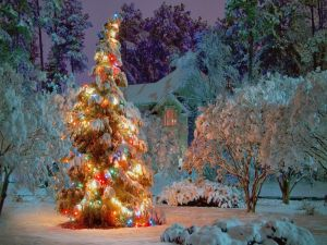 Snow and lighted pine