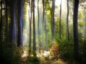 Sunlight illuminating the forest