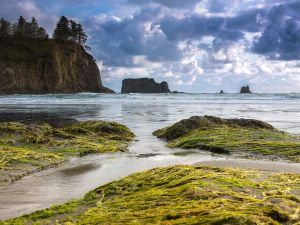 A beach in Olympic National Park, Washington