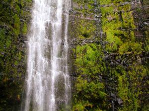 Moss surrounding the waterfall