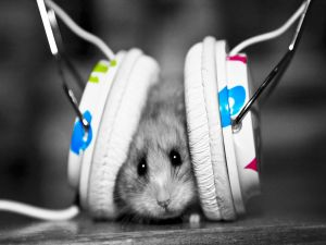 Little mouse listening to music