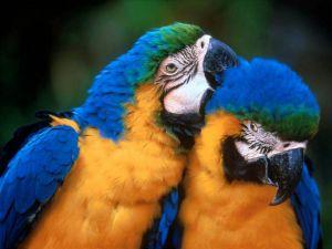 Parrots friends