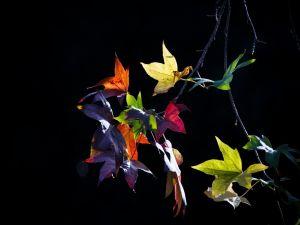 Leaves in various colors