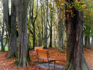 Benches in the forest