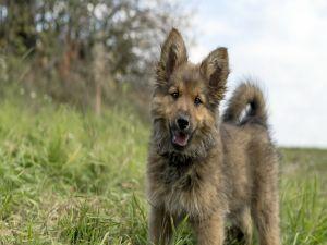 Tender puppy