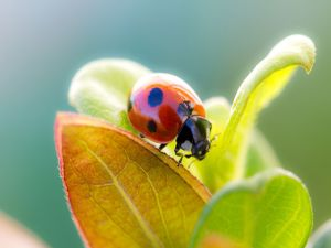 Ladybug on the leaves of a plant