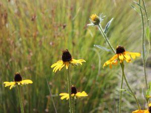 Curious wildflowers