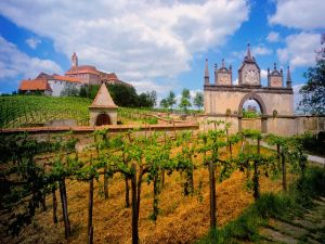 A great house in a vineyard