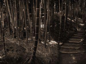 Road between bamboo