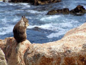Squirrel on a rock in the sea