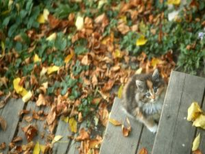 Kitten on the stairs with autumn leaves