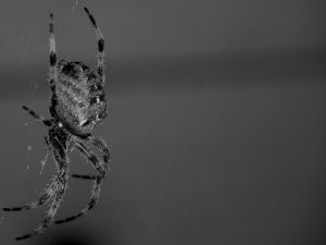 Spider in its spider web
