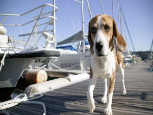 A dog between boats