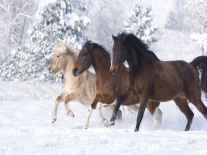 Three beautiful horses in the snow