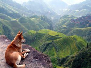 Dog observing the landscape