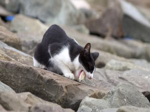 Cat on the rocks