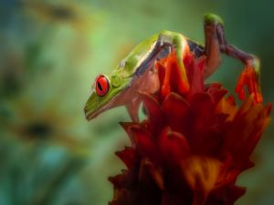 Frog on a flower