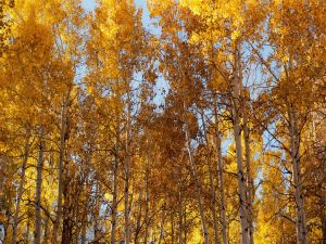 Trees touching the sky in autumn