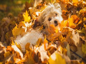 Puppy between dried leaves